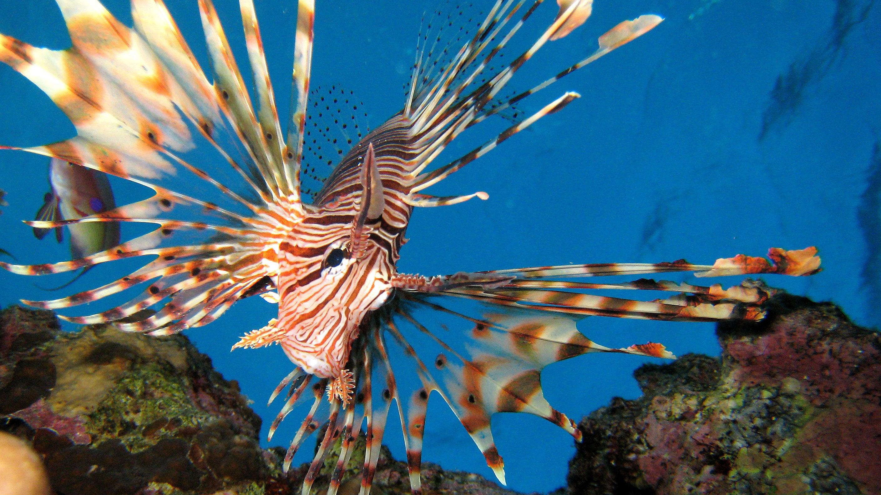 Dangerous fish for Fish fish fish fish fish