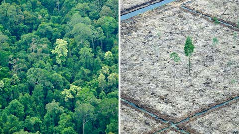 Combo of two photos taken on Oct. 16, 2010 during an aerial survey mission by Greenpeace over Sumatra island shows an area of rainforest of the Sungai Sembilang National Park, left, while nearby, at the edge of the protected area, a lone tree isolated after the peatland forest was cut and cleared in a huge paper and pulpwood concession area located in South Sumatra province. (Romeo Gacad/AFP/Getty Images)
