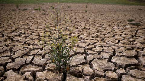 Weeds grow in dry cracked earth that used to be the bottom of Lake McClure on March 24, 2015 in La Grange, Calif. (Justin Sullivan/Getty Images)
