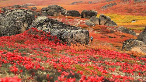 Stunning autumn colors near Serpentine Hot Springs at Bering Land Bridge National Preserve in Alaska. (NPS/Katie Cullen)