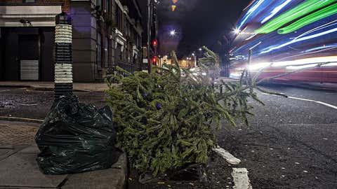 A tree on Bayham Street in Camden, London, England. (Jason Wen)