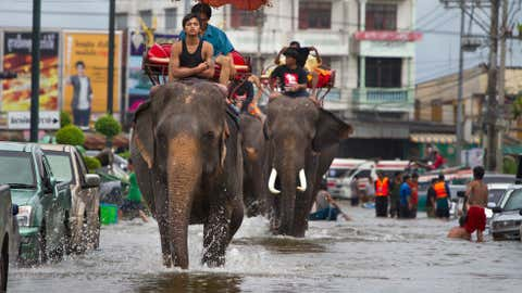 Thai mahouts ride their elephants through the flooded streets October 10, 2011 in Ayutthaya, Thailand, near Bangkok. (Paula Bronstein /Getty Images)