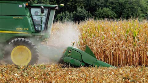 A farmer uses a combine to harvest corn. (Canadian Press)
