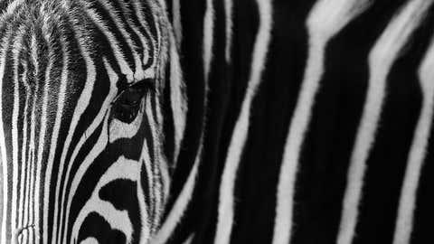 Photographer Goran Anastasovski captures stunning portraits of zoo animals. (Goran Anastasovski)