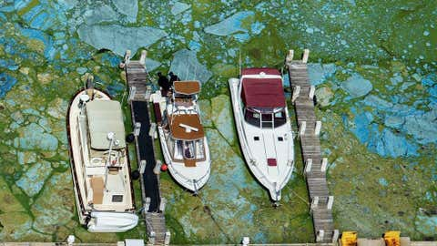 Boats docked at Central Marine in Stuart, Fla., are surrounded by blue green algae, Wednesday, June 29, 2016. ( Greg Lovett/The Palm Beach Post via AP)