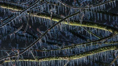 Icicles lengthen in freezing rain as they hang from branches on a maple tree in Eugene, Oregon, Wednesday, Dec. 14, 2016. (Brian Davies/The Register-Guard via AP)