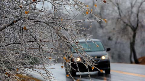 Ice-covered limbs hang near the ground as traffic passes by Saturday, Nov. 28, 2015, in Oklahoma City. (Jim Beckel/The Oklahoman via AP)