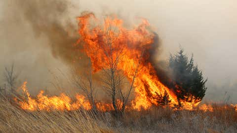 A tree erupts in flames as the grass fire continues to burn east of Lake City, Kan., Wednesday, March 23, 2016. A large grass fire burnt thousands of acres in Barber County. (Travis Morisse/The Hutchinson News via AP)