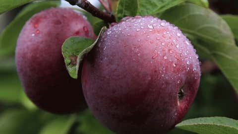 apple-orchards-banner