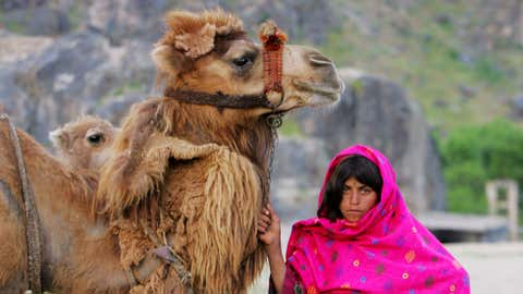 Sawabe, 12, from the nomadic Afghan Kuchi tribe stands near her camp with a camel May 30, 2005 in Faisabad, in northeast Afghanistan. The Kuchi of Afghanistan are nomads moving to the northeast in the spring and summer months where it is cooler and there is plenty of food for their herds. (Paula Bronstein/Getty Images)