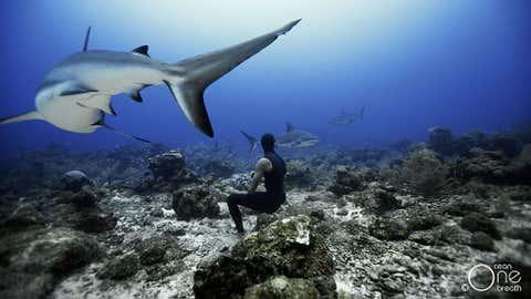Christina and Eusebio Saenz de Santamaria have swam with many breeds of sharks, including Caribbean reef sharks. (Oneoceanonebreath.com)