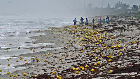 Thousands of cans and vacuum packed bricks of Cafe Bustelo brand coffee washed up on the beaches of Indialantic, Florida in December. (Tim Shortt/Florida Today via AP)