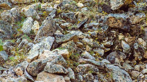 Can you spot the hidden animal in this photograph? (Art Wolfe Photography)
