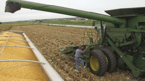 drought-corn-harvest