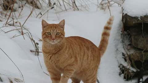 iWitness user barkit from Lewistown, Ill., sent this picture of their cat, DS, enjoying the snow.