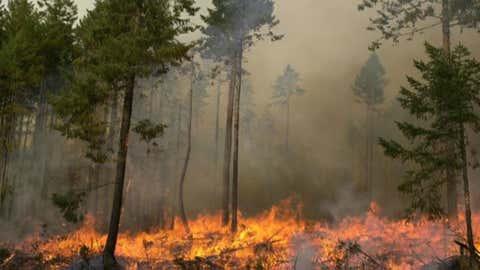 (Source: BC Wildfire Service)