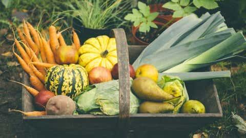 Seasonal Fall Produce