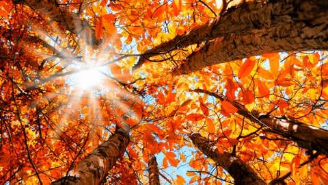 Fall sunshine (iStock photo)