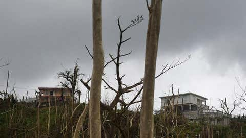 Trees and buildings stand damaged after the passing of Hurricane Maria, in Yabucoa, Puerto Rico, Thursday, September 21, 2017. (AP Photo/Carlos Giusti)