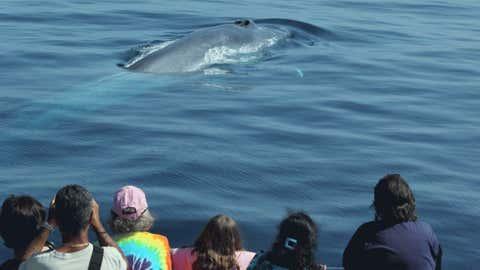 endangered-whales-calif-2