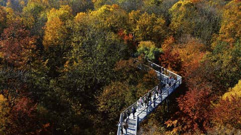 Visitors walk between trees bearing their autumnal colors during sunny weather at the Baumkronenpfad (treetop path) in the Hainich National Park near Bad Langensalza, central Germany, on Oct. 21. (AP Photo/Jens Meyer)