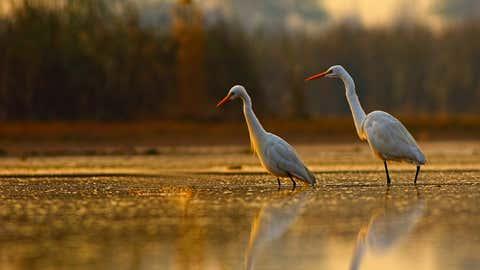Everglades National Park in Florida (Thinkstock)
