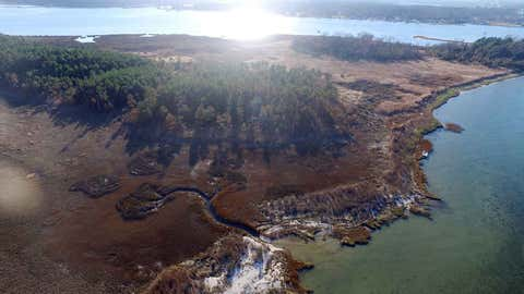 "This undated aerial photo provided Matthew Kirwan shows a narrow band of brown pine trees that were killed by October 2015 tidal flooding near Yorktown, Va. Rising sea levels are killing trees along vast swaths of the North American coast by inundating them in salt water. The dead trees in what used to be thriving freshwater coastal environments are called ""ghost forests� by researchers. (David Walters via AP)"