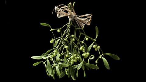 This festive plant isn't what it seems. (iStock/aidaricci)