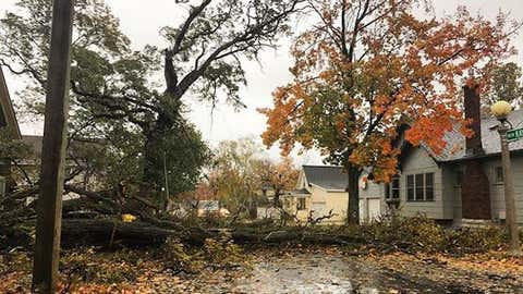 A tree is downed during a high wind event in Marquette, Michigan, on Oct. 24, 2017. (sageandspry/IG)