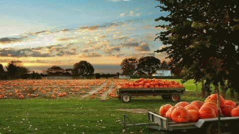 iWitness weather user heavensmissingangel took this shot of pumpkins in Michigan.