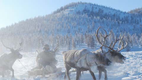 A team of reindeer pulls a man on a sled in the Republic of Sakha, Russia.  (Photo credit:  Bolot Bochkarev)