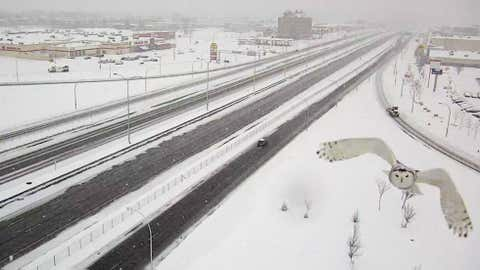 Canada's Transport Minister recently shared photos of this snowy owl flying in front of a Transport Quebec traffic cam. (Transport Quebec)