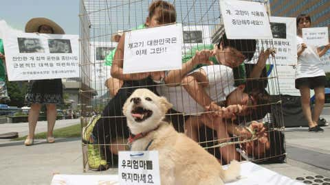south-korea-dog