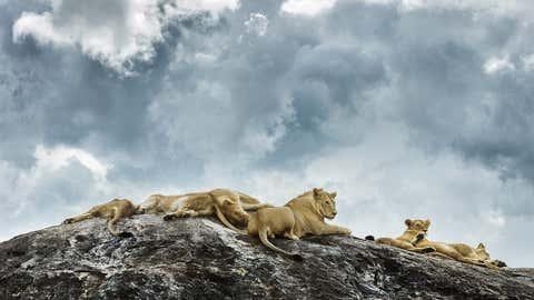 Architecture student Anatol Struna took stunning photographs of Tanzania's wildlife and landscape. (Anatol Struna)