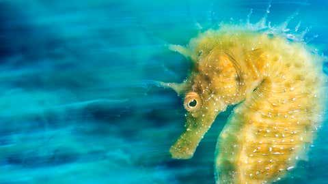 """Er ist der Sieger 2016 - dank seines Fotos """"Gold"""": Der Italiener Davide Lopresti ist Unterwasserfotograf des Jahres und Gewinner der Kategorie International Macro."""