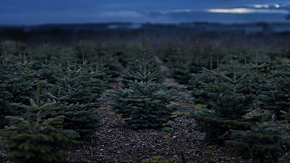 Árboles de Navidad reales o artificiales: ¿cuáles son mejores para el ambiente?