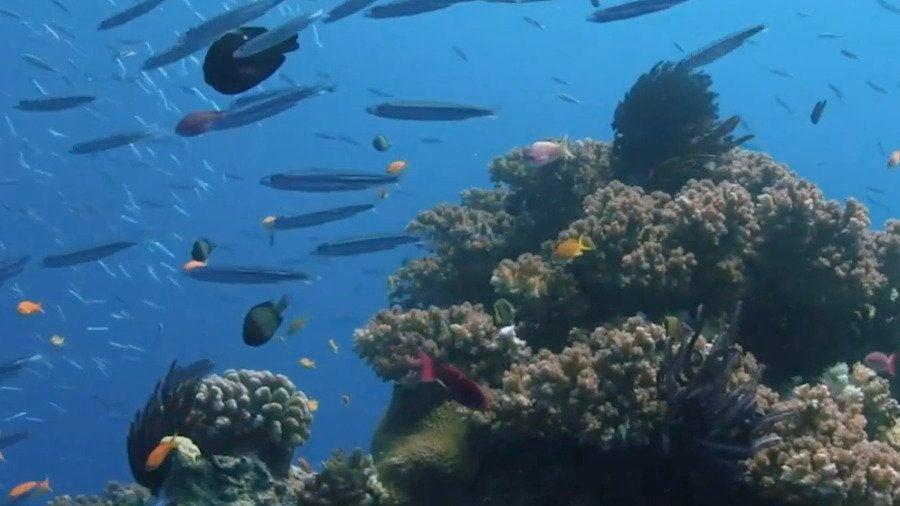 U.N. Could Downgrade Great Barrier Reef, Australia Miffed