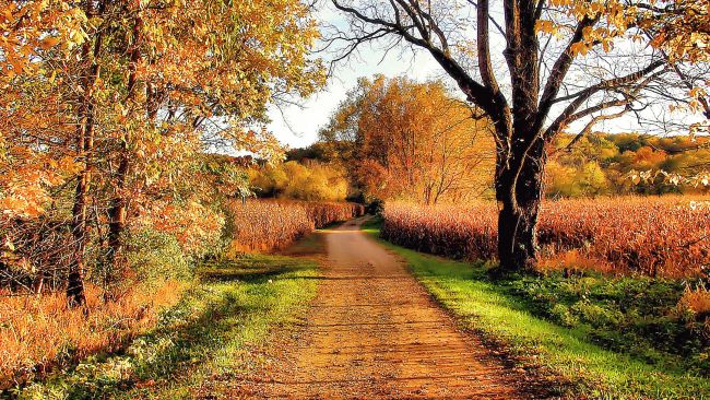 Autumnal Equinox The First Day Of Fall Is Sept 22 The