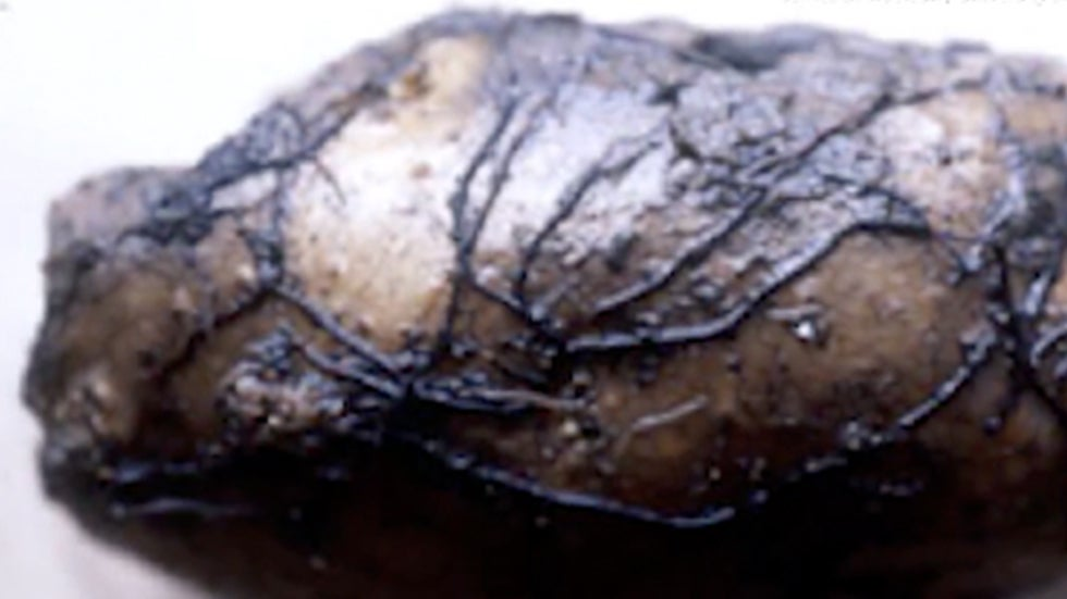 2,500-Year-Old Mushroom Keeps Growing, Could Help Cancer Research