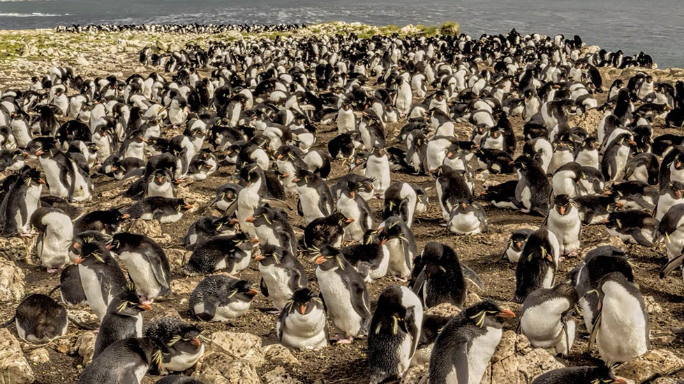 Penguin-Filled Private Island in Falklands up for Sale