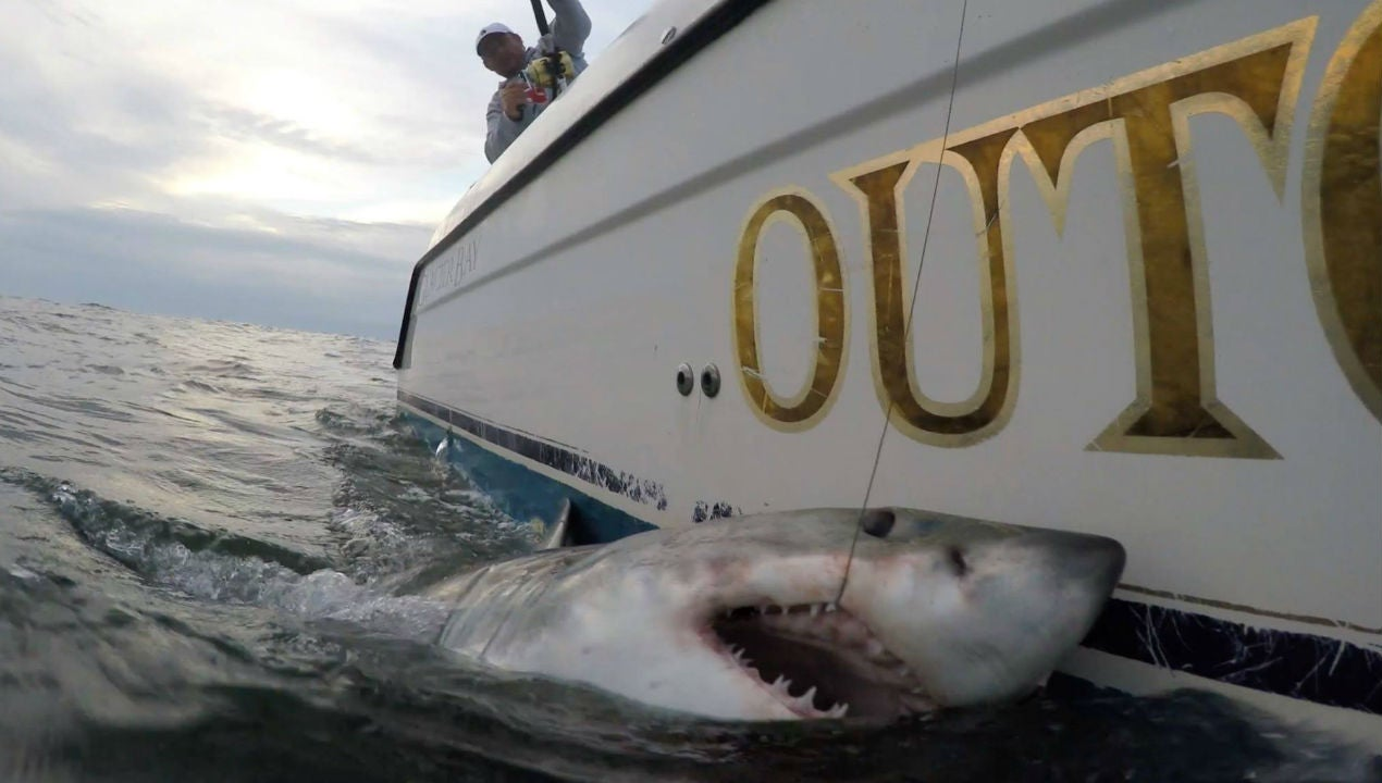 Fishing Crew Nabs Two Great White Sharks Off Carolina Coast
