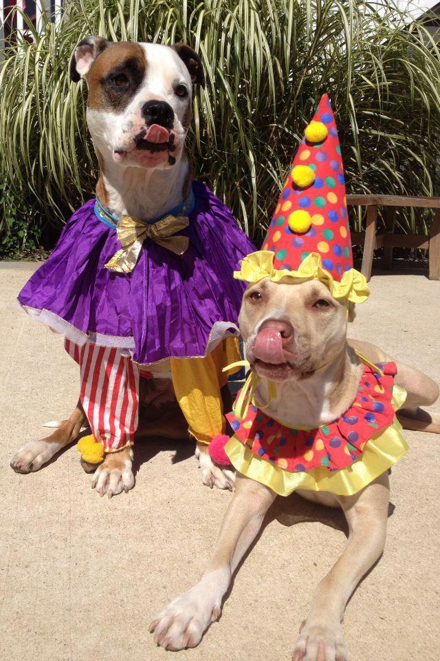 Top 15 Halloween Pet Costumes