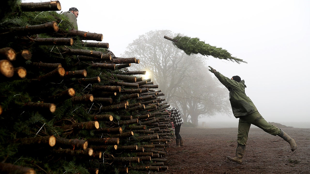Behind the Scenes at a Christmas Tree Farm (PHOTOS)