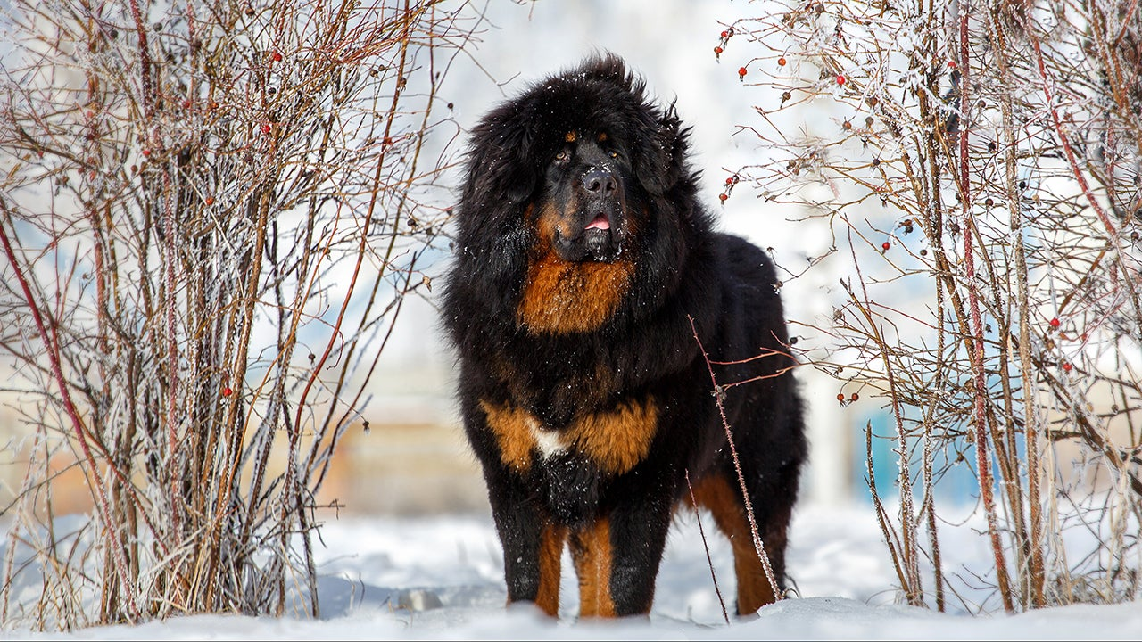 10 Best Cold-Weather Dog Breeds (PHOTOS)