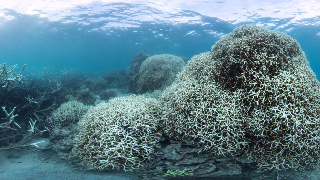 great barrier reef undergoing a u0027complete ecosystem collapse
