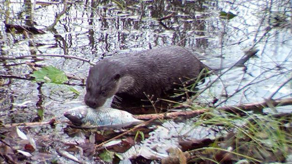 Wildlife Making Comeback Around Chernobyl Nuclear Site