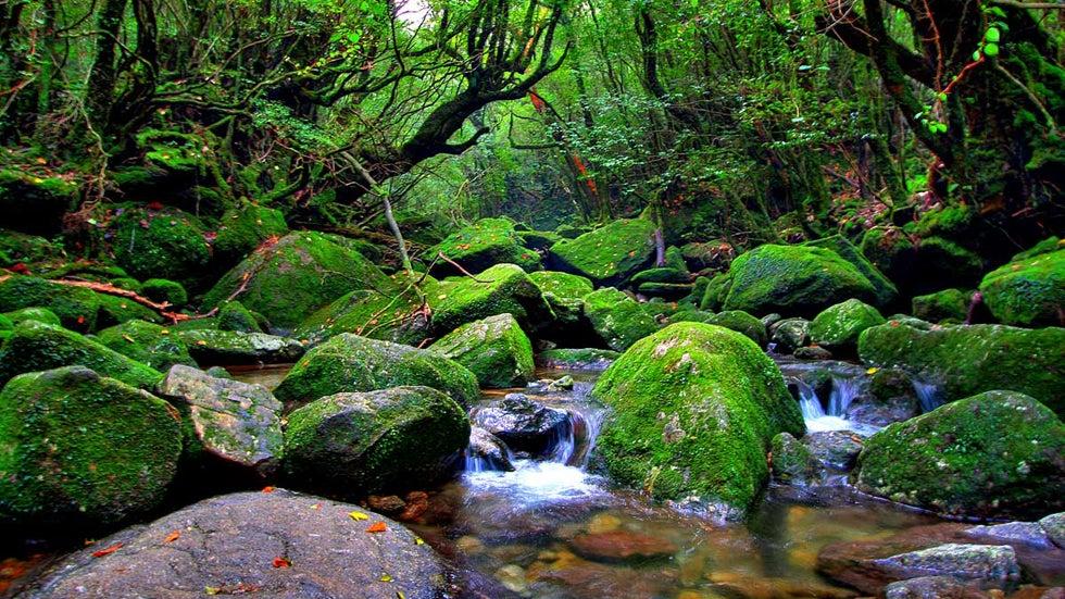 beautiful dreamscapes of yakushima  japan  photos