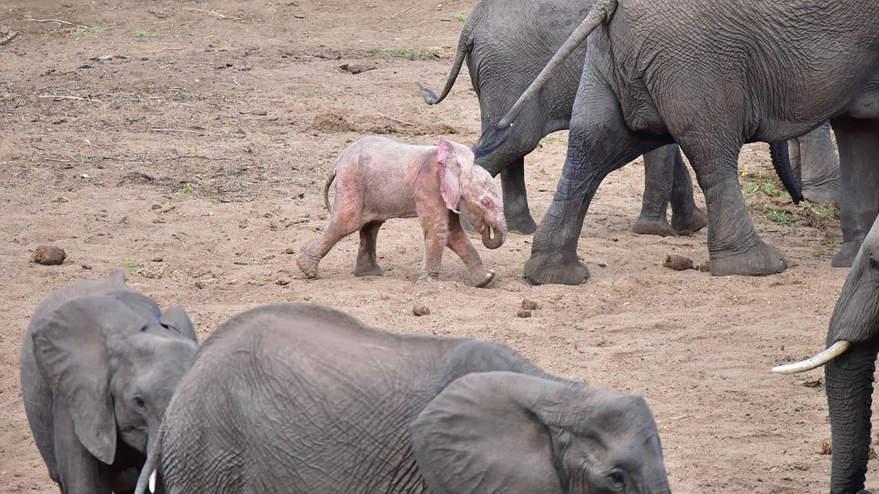 3_caters_pink_elephant05_0.jpg