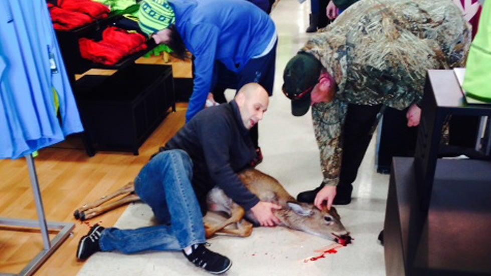 Shopper Tackles Deer at Pennsylvania Sporting Goods Store