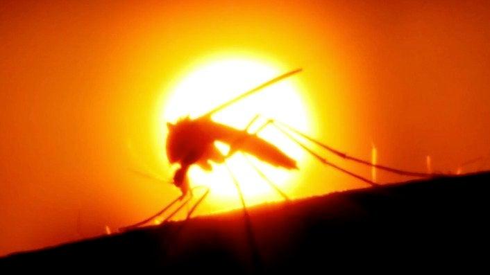 Google's Plan to Eradicate Mosquito-Borne Diseases May Be Working